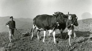 """""""Hueles a vaca""""... y la vergüenza te dura 60 años."""